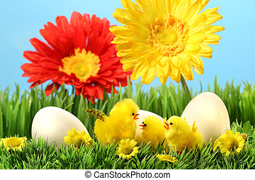 Easter chicks in the grass
