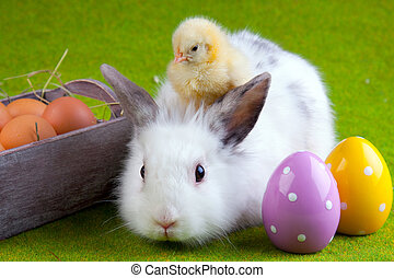 Easter concept, bunny, chick and eggs