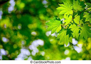 Green leaves background for environment design