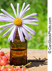 essential oil with purple daisy