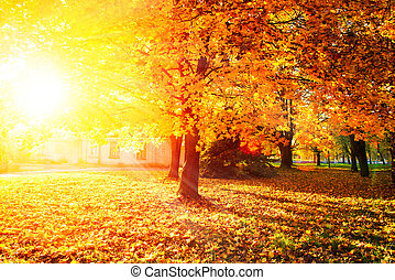 Fall. Autumnal Park. Autumn Trees and Leaves