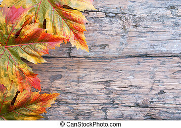 Fall Background with Maple Leaves on Wood