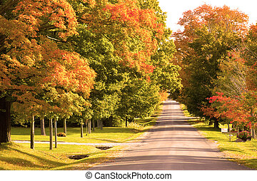 Fall foliage on maple trees down a old country road