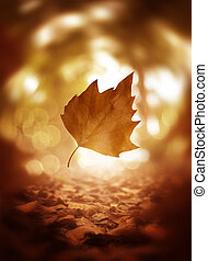 Falling Autumn Tree Leaf Background Close Up