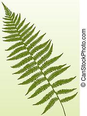 Single fern frond