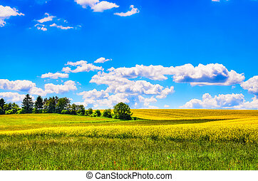 Field of yellow flowers with and green meadow