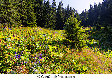 fir tree in the forest at summer