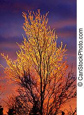 Fire Ice Tree