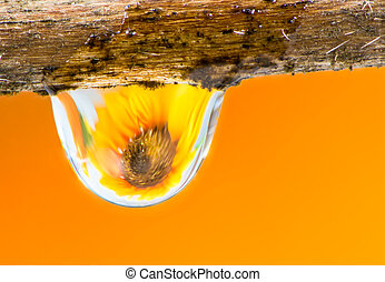 Flower refraction in a raindrop