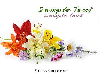 Elegant flowers isolated on white