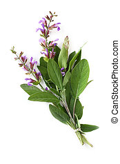 Flowering sage, tied with string, against white.