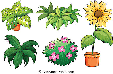 Illustration of flowerpots and plants on a white background