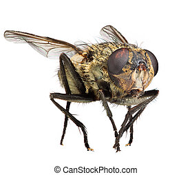 Photo of a fly close up on the white