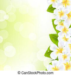 Frangipani Flowers With Leaf, Vector Illustration