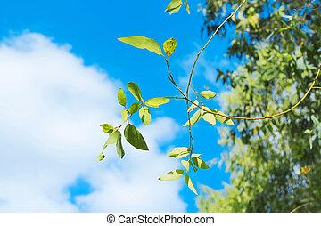 Fresh green leaf with clear blue sky