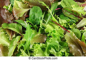 Mixed lettuces closeup