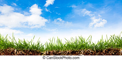Fresh spring green grass with blue sky