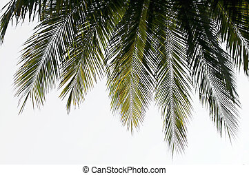 Silhouette of a coconut palm leaf fringe