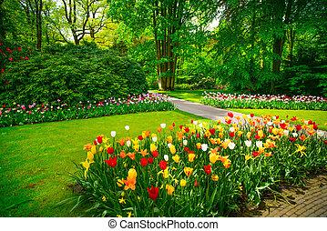 Garden in Keukenhof, tulip flowers and trees on background in spring. Netherlands, Europe.