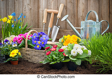 Gardeners hands planting flowers in pot with dirt or soil at back yard