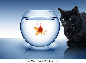 goldfish in danger - with black cat