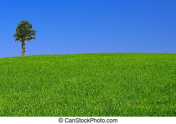gorgeus landscape wi