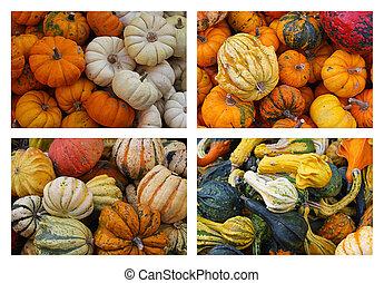 An Assortment Of Gourds and pumpkins collage