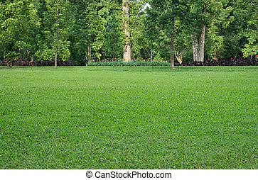 Grass field and various trees on background