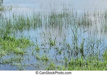 Grass in a pond