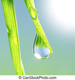 Fresh grass with dew drops close up