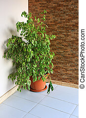 green indoor plant in a red pot