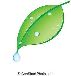 green leaf with drops of dew on