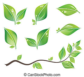 Set of green fresh leaves and branch with water drops. Vector illustration.
