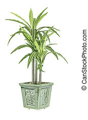 A green leafy plant in a flower pot isolated on a white background.