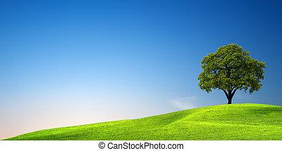 Green tree at sunset