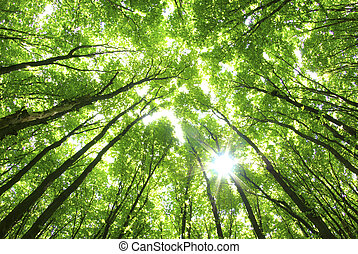 green trees background in sunny day