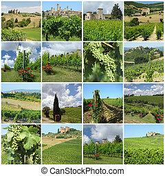 green vineyards collage