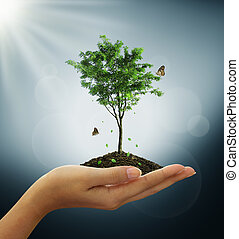 Growing green tree plant, butterfly, leaf in a hand on blue background