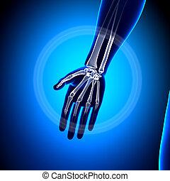 Hand Anatomy - Anatomy Bones