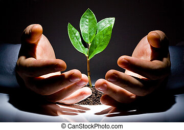 Photo of green plant between male hands on a black background