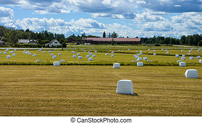 Hay bales in plastic wrap on summer field