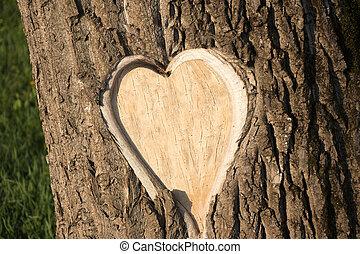 Hearth shaped tree bark