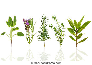 Sage, lavender, rosemary, thyme and bay leaf herbs, over white background with reflection.