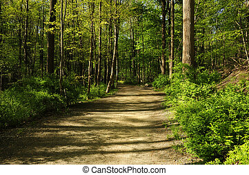 A hiking path through a forest