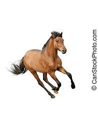 horse isolated