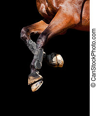 Horse legs isolated on black.