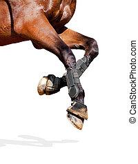 Horse legs isolated on white.
