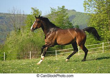 Brown horse running in pasture.
