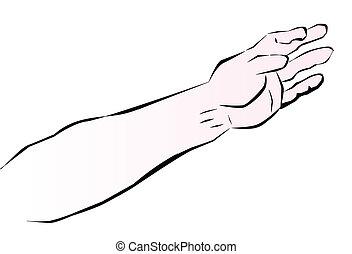 Sketch of a human arm based on sketch by Leonardo Da Vinci