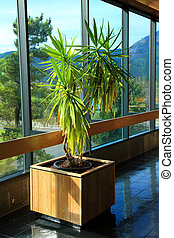 A big Yucca plant on display in the corridor at the Bonneville visitor center.